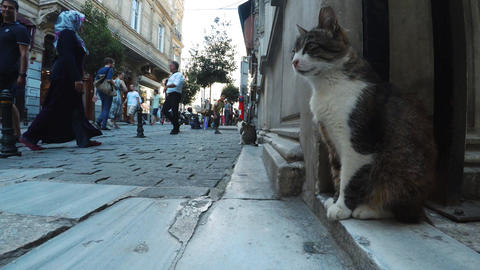 Cat in the center of Istanbul. Turkey. 4K Footage