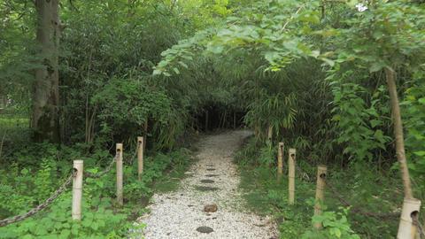 Walking through the bamboo alley, botanical park Georgia Footage