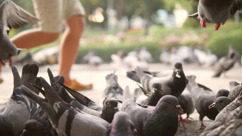 Running Boy Frighten Pigeons and they Fly Away in City Park. Closeup HD Footage