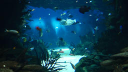 Deep Ocean Colorful Fish Swimming In Large Aquarium 영상물
