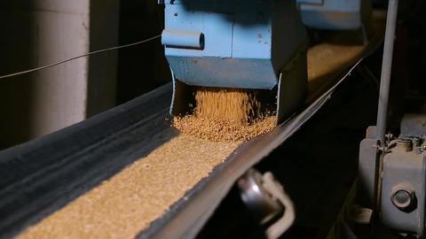 Grain moves along the conveyor belt Filmmaterial