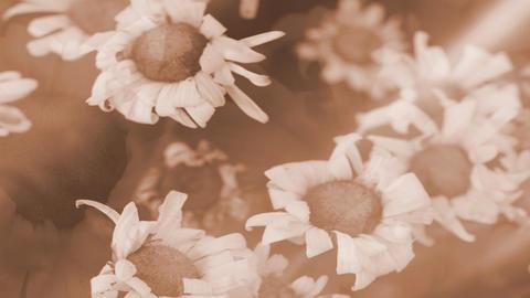 Aged flowers Footage