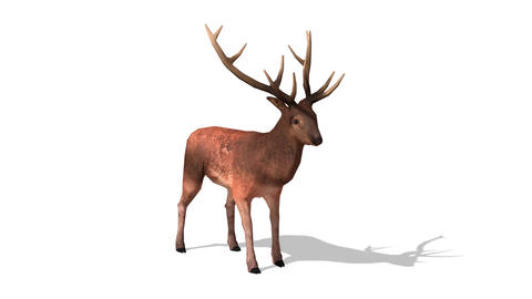 FHD-Deer Animation