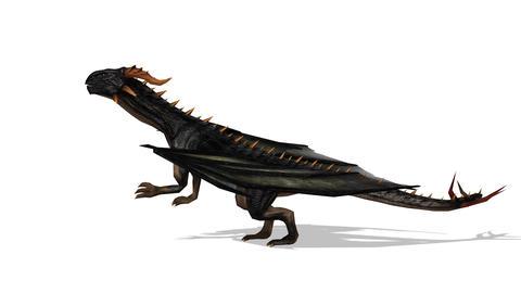 FHD-Dinosaur CG動画