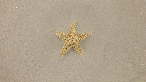 Wind blowing on the sand and opening yellow starfish , top view Live Action