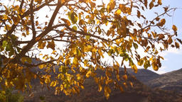 yellowing tree branches fall in the wind in the autumn Footage