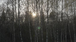 Autumm sunlight through bare trees in forest during moving in car on road Footage