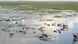Many different species of birds eating together in a swamp Footage