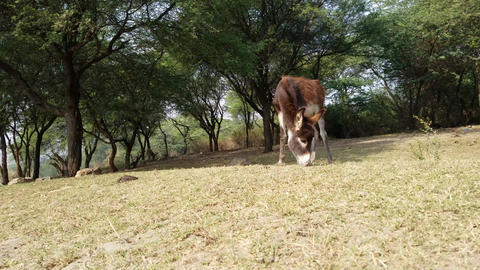 Young Donkey eating grass Filmmaterial