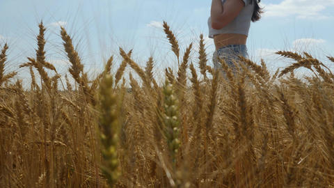 Long-haired woman walks on wheat field and talks on cellphone Live Action