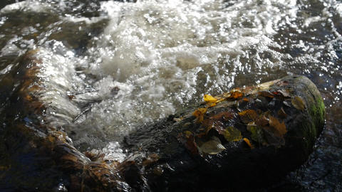 Close-up shot of water streams in a mountain creek with yellow and brown autumn Footage