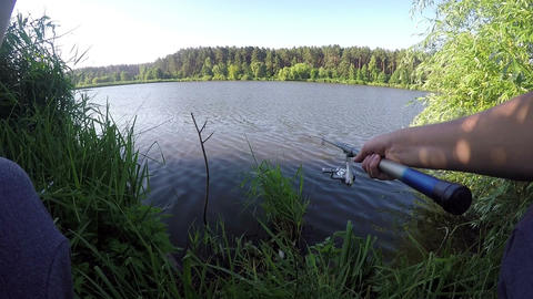 Two fishing lines catch fish on a lake bank with reed in summer Footage