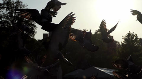 A flock of doves take off and fly over a square on a sunny day in slo-mo Footage