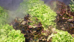 Spraying green salad with cool mists of water in supermarket to better hydration Footage
