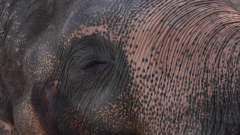 extreme close up video of a elephant eye Footage
