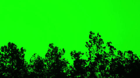 3178 plant silhouette on green screen, chromakey Live Action