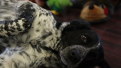 hunting dog happy to host Live Action