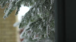 snow-covered pine branch dolly camera Footage