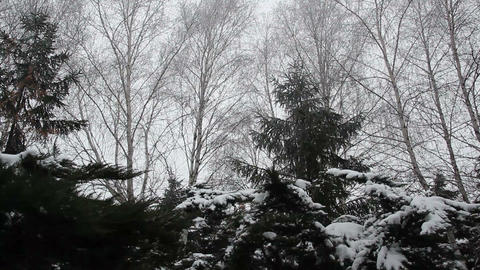 Snow covered trees in the park Footage