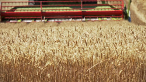 Combine harvester cuts ripe wheat in field Footage