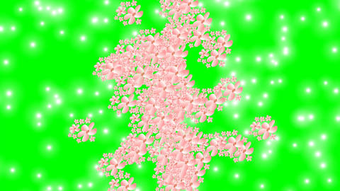 Spring animation, pink flowers and little white lights on green screen FullHD Animation