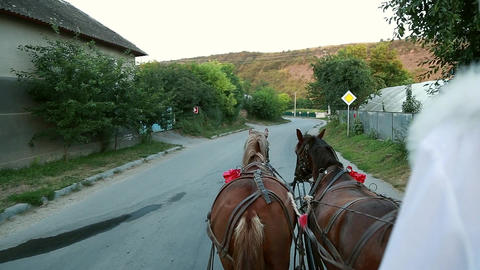 Two horses in a cart with the eyes of a groom Footage