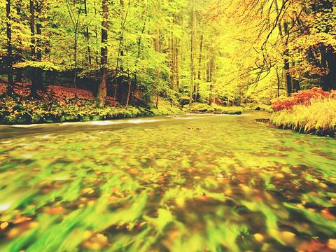 Colors of river . Forest autumn trees by the mountain stream Photo