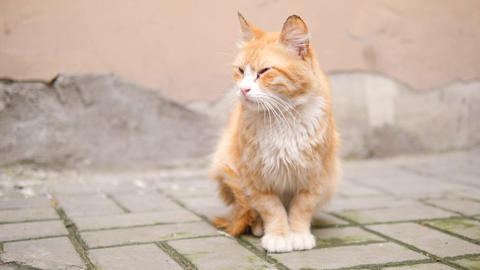Old ginger homeless cat on the street. 4K Slowmotion Footage