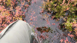 Man in Rubber Rain Boots Walking Thru Water Pond in Autumn Rainy Day. 4K Footage