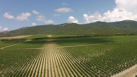 Aerial view of Vineyard ビデオ