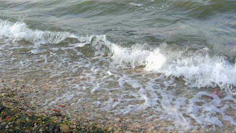 waves splashing on sandy beach in windy weather bringing sea grass. In Footage