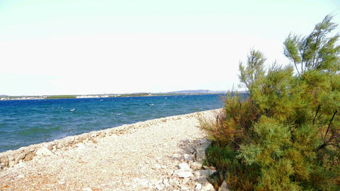 Windy weather at adriatic stone sea shore. Wind moving small pine bush and waves Footage