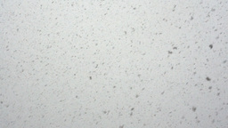 Large flakes of snow Footage