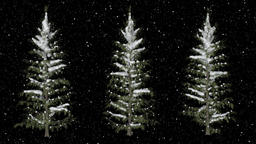 Pine Trees Under The Snowfall CG動画素材