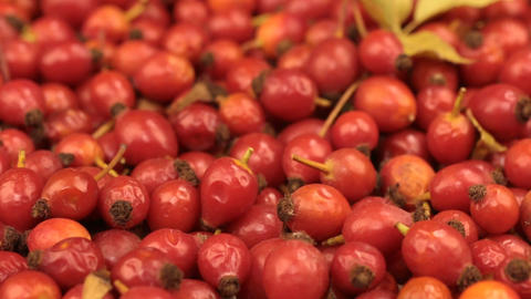 Close-up of the rotation of rosehips and leaf Footage
