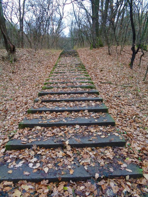 Stairs In the autumn woods Foto