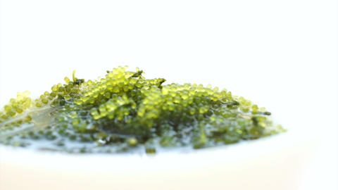 Video of Umibudou, Green Caviar (Caulerpa lentillifera) Japanese Grape seed seaw Footage