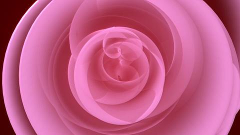 Rose petal spirals Stock Video Footage