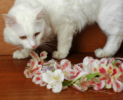 White cat gets acquainted with flowers Fotografía