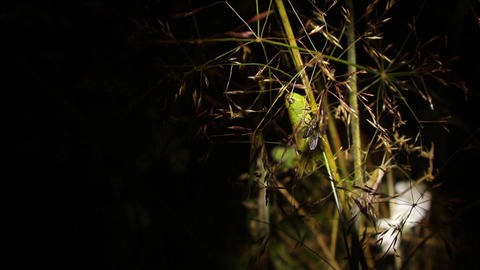 Insects moving on blades of grass blown by wind - 56a Footage