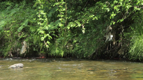 Insects over a mountain stream 11 Footage