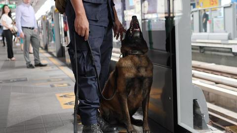 Police Man with Funny Security Dog at Subway Train Station Platform. 4K. Bangkok Footage