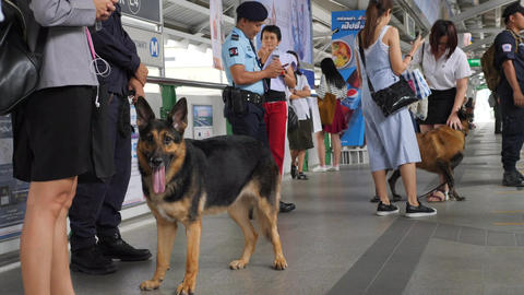 Young Woman Petting Police Security Dog at Subway Train Station Platform. 4K Footage