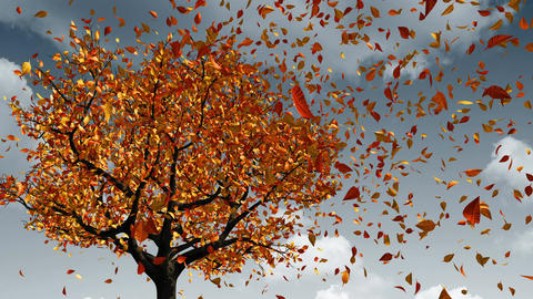 Concept Of Changing Of The Seasons From Spring To Autumn. Leaves Appear On The Animation