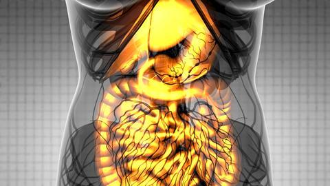 Science Anatomy Scan Of Woman Digestive System Glowing 動画素材, ムービー映像素材