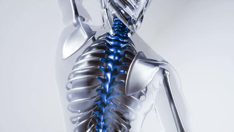 human spine skeleton bones model with organs Footage