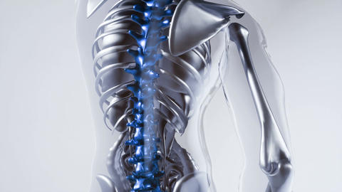 human spine skeleton bones model with organs 動画素材, ムービー映像素材