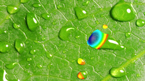 Rainbow Reflected In Droplets On The Green Leaf Animation