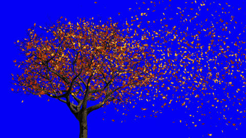 Leaves Appear On The Tree, They Turn Yellow And Then Fall Off. Concept Of Changing Of The Seasons Animation