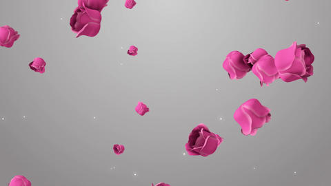 Animation of pink roses on the beautiful background Stock Video Footage